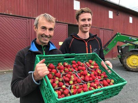 SØTE OG GODE: Bonde Stein Martinsen og sønnen Marius gleder seg over den økte interessen for selvplukk av jordbær.