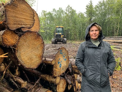 TREFELLING: Elisabeth Gamkinn og de andre naboene på Borgeskogen er skuffet over at kommunen ikke stanser trefellingen.