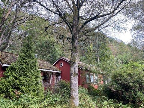 Forfallen hytte ved Bråsteinvannet ligger nå ute for salg.