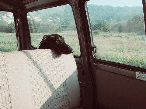 Ser du hunder i bil under varme dager bør du følge med.