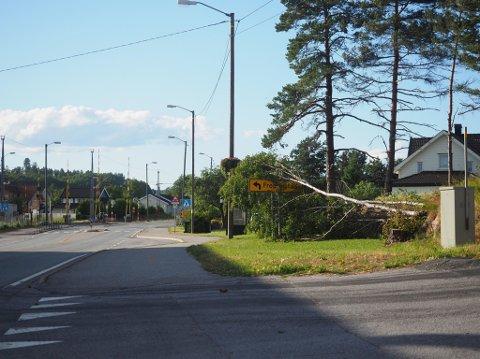 Flere trær har den siste tiden måttet gi etter for vinden, slik som dette i Stasjonsbyen tirsdag kveld. Så mye vedvarende vind er ikke helt hverdags i juni fortelelr meteorolog Bente Wahl.