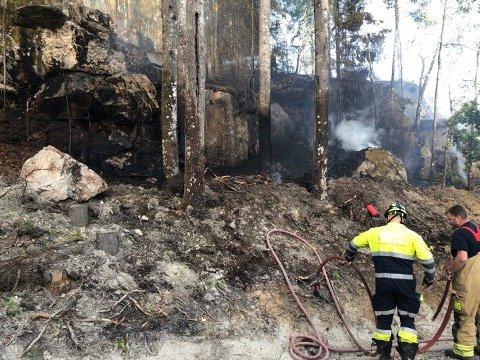Brannen er rett ved en skogsvei. (Foto: Tobias Nordli)
