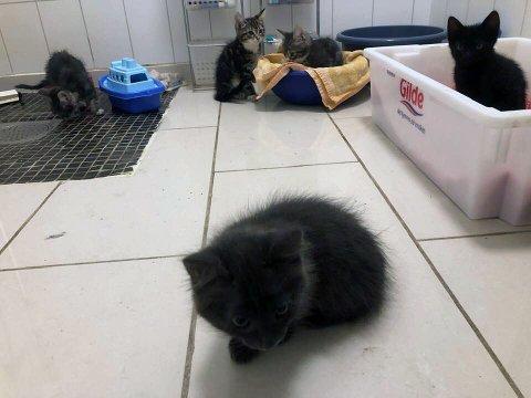 Disse fem kattungene ble funnet dumpet ved Børtevann mandag kveld.
