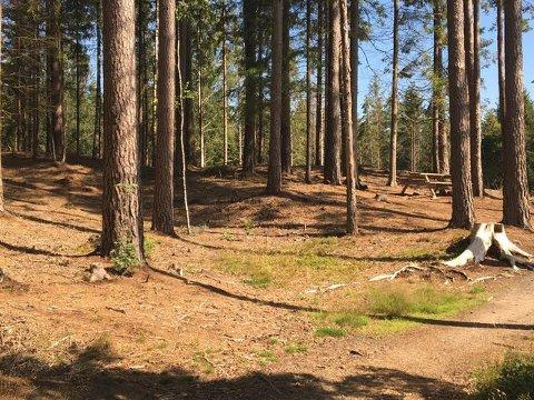 Päivi Hilska, landskapsarkitekt og tidligere miljøvernkonsulent i Sarpsborg kommune, skriver om flygesanddyner og andre kultur- og naturminner i Kalnesskogen. Dette bildet viser deler av den største sanddynen. (Foto: Päivi Hilska)