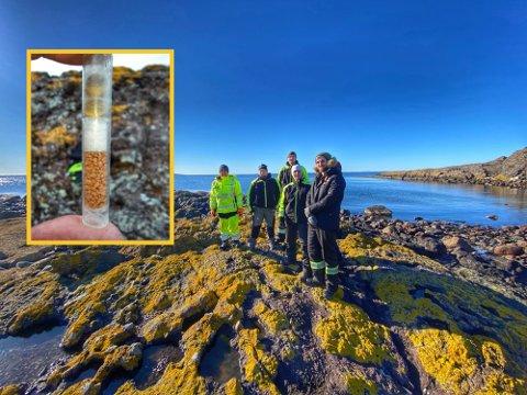 PÅ OPPDRAG: En ryddegjeng fra Miljøstiftelsen Elv og Hav fant onsdag en giftampulle utenfor Larkollen.