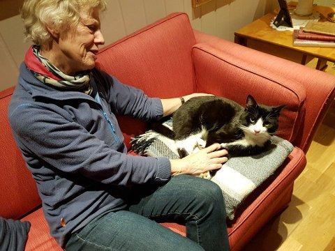 Katten Cæsar har forsvunnet. Eier Greta Hekneby ber folk om hjelp for å finne han.