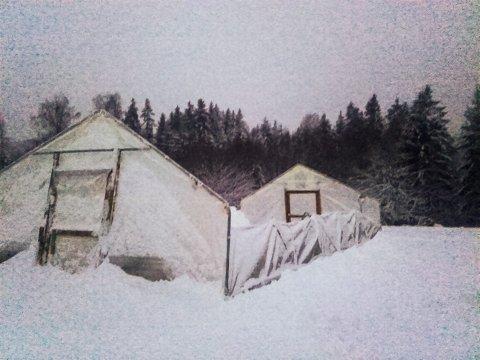 KNAKK: Drivhuset på Hauger gård klarte ikke snømengdene og takkonstruksjonen kollapset. FOTO: PRIVAT