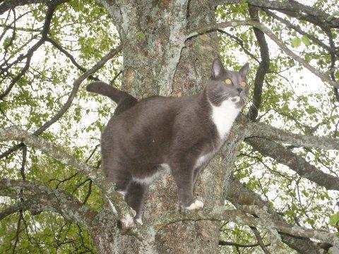 Katten Gråtass har vært borte i nesten tre uker.