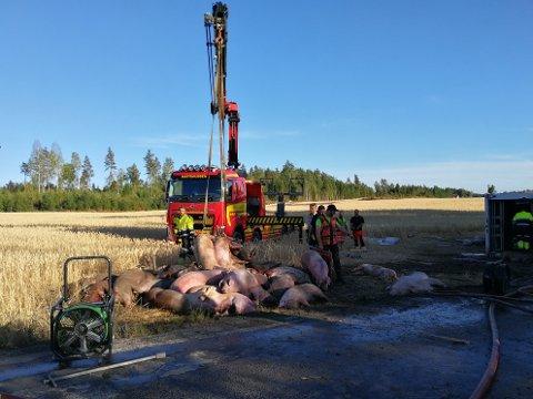 Flere gris mistet livet under en trafikkulykke onsdag ettermiddag i fem-tiden.