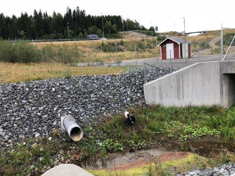 Mysenelva/Hæra fikk i helga påslipp av nærmere 300 kubikkmeter avløpsvann. Elva har vel å merke på grunn av naturlig forurensning normalt ikke klart vann.