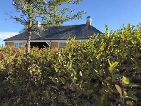 MYE BÆR: Det bugner av svartsurbær på buskene ved Heggin om dagen.