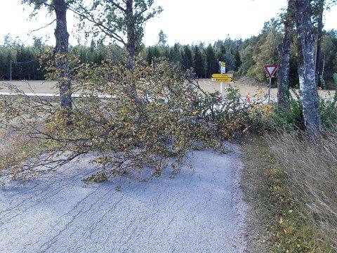 Dette vindfallet var i ettermiddag å se på innkjøringen til Dillevikveien fra fylkesvei 115 i Trøgstad
