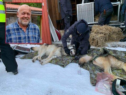 DEISJØULVEN: Denne ulven er genetisk viktig. Sammen med sin make, ble de flyttet fra Østerdalen til Østfold for å bevare den. Innfelt bilde:Jostein Grav (58). Dette bildet ble tatt i en annen sammenheng.