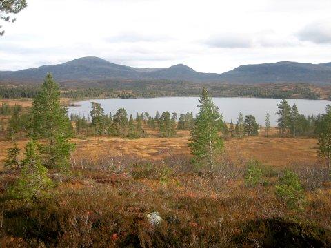 Lovbrudd: Ulf Larsen ble dømt i Inntrøndelag tingrett for å ha brutt naturmangfoldsloven i Blåfjella-Skjækerfjella nasjonalpark, da han satte opp en sammenleggbar lavvo av kryssfiner i nasjonalparken.