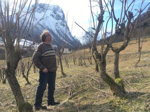 PÅGANGSMOT: Rune Hatleli gav aldri opp trua på svarthylltrea heime på garden i Fresvik. Koronasmitten har så å seia tømt lageret av lokalproduksjonen.
