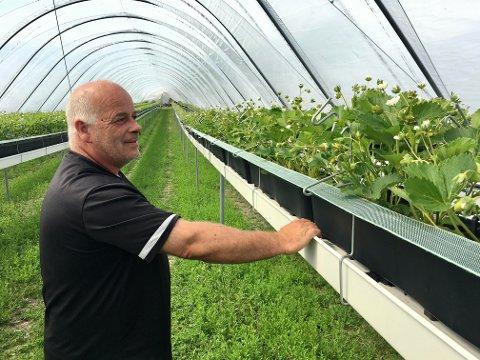 KREVJANDE SESONG: Ola Hopperstad i Sognabær har 170.000 planter som skal plantast ut og truleg over 90 tonn som skal haustast. Kven som skal gjera jobben, er uvisst.