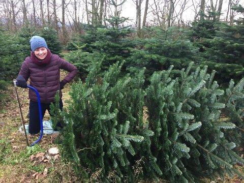 En sikker vinner for kommunedirektør Ingrid Nordbø og familien er å hogge juletrær på Rege.
