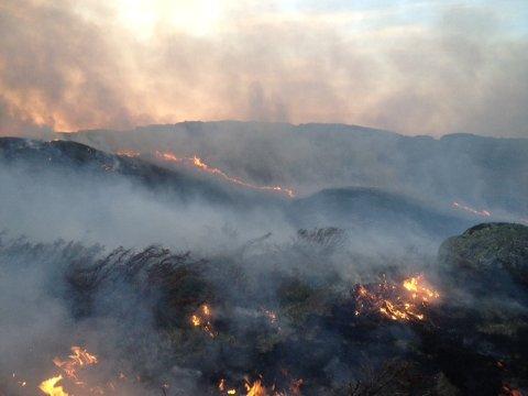 På grunn av fare for skog- og gressbrann er det nå totalforbud mot å gjøre opp alle former for ild i og i nærheten av skog og utmark.