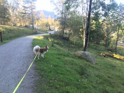 VIL HA HUNDEPARK: En hundepark hvor hunder kan sosialisere og leke uten bånd er noe flere har ønsket seg. Nå ber ordføreren om frivillige som kan bidra til at dette realiseres.
