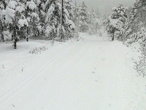 JULESTEMNING: Lysløypa på Bjødnabu er eit skikkeleg postkortmotiv etter snøfallet i helga. Det er køyrd opp både klassisk- og skøytespor.