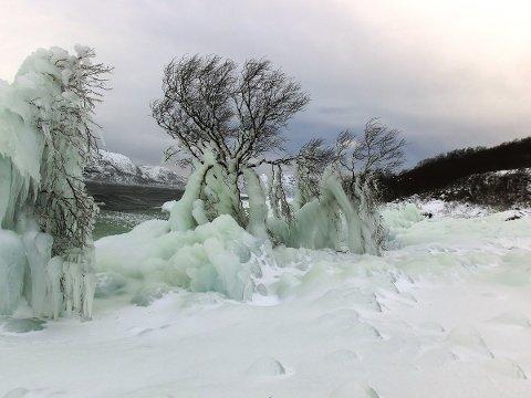 Nedisa tre ved Sandvatnet. (Foto: Rune Folkvord)