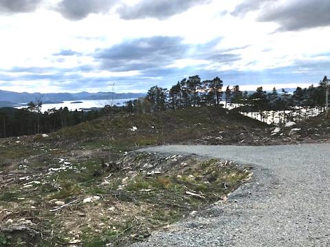 MÅNELANDSKAP: Ved skoghogst i feltet på Randøy skulle det takast omsyn til viktige leve- og næringsområde for mange organismar. – Det ser ut som eit månelandskap, slår Naturvernforbundet fast.
