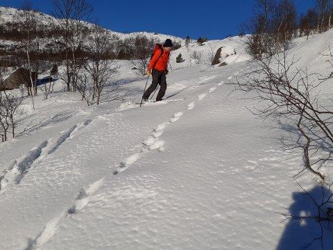JERVESPOR: Kjetil Bråtveit studerer jervespor ved Nagastølen i Jøreplandsheia. Han og Vidar Helgeland fikk se jerven da de var på skitur på lørdag.
