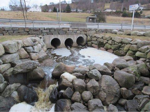 BRUNT VANN: Vannet luktet vondt og så skittent ut på fredag.