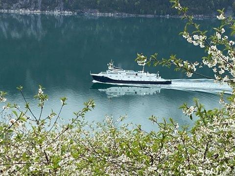 INNSTILT: Turistbilferja «Bolsøy» er innstilt i dag på grunn av kraftig vind i Høgsfjorden og Lysefjorden. Her er ferja fotografert ved Flørli i pinsen.