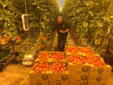 Arnar Risan er produksjonsleder ved veksthuset på Mære landbruksskole.