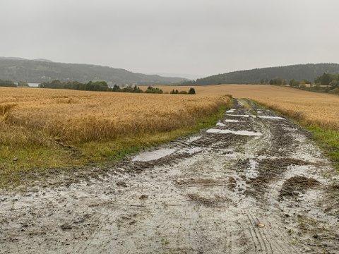 Per 24. september er det levert bare knappe 4.000 tonn korn til Steinkjer kornsilo. Det har vært et trøstesløst innhøstingsvær, men nå er det meldt bedre vær.