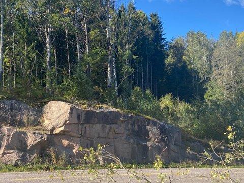 I september raste deler av et tre over Svelvikveien. Det kan skje igjen nå.