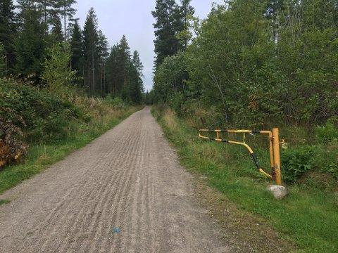 De to neste ukene er skiens skoger mer tilgjengelig enn ellers.