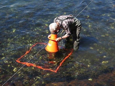 I FELTEN: Jan Erik Tangen har fått i oppdrag fra Fylkesmannen å kartlegge utbredelsen av Stillehavsøstersen i Telemarks skjærgård. (FOTO: Helge Tangen Aarflot)