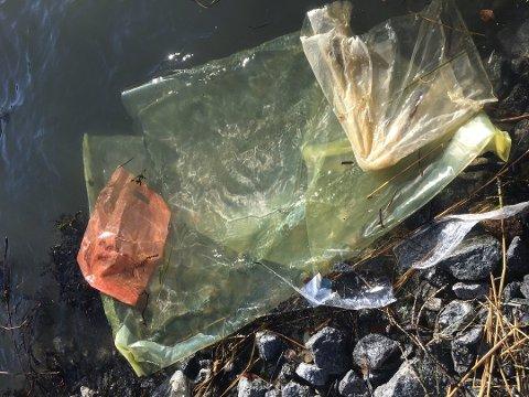 DYR DØR: Dyr i havet dør fordi de spiser eller sitter fast i plastavfall. Her er et eksempel på plast som flyter i land i Sandefjord. Foto: Gyrid Hasaas