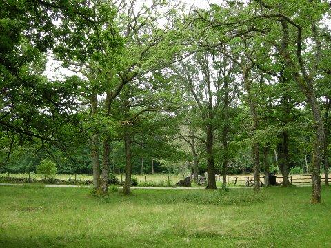 Den flere hundre år gamle eikeskogen med beitemark på bakken hadde allerede status som landskapsvernområde.