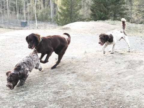 HUNDEFRIHET: Friheten for hundene er tilbake. Hundegården på Gulset åpnet fredag.
