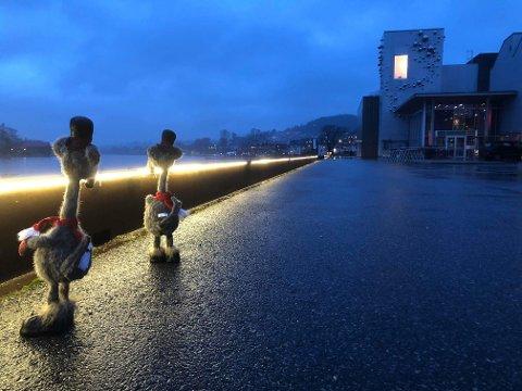PÅ VEI: Har du sett disse ramperottene? Her er de på vei mot Ælvespeilet i Porsgrunn.