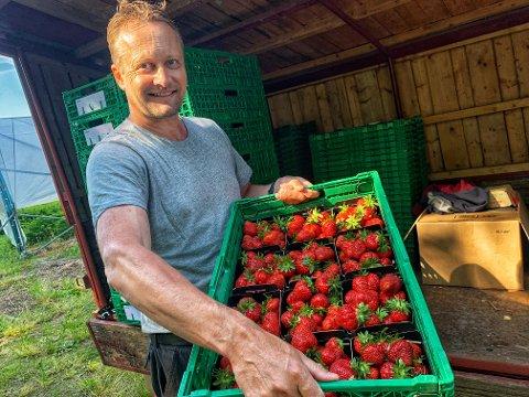 FORVENTET: – Henleggelsen er som forventet, sier Petter Borgestad om anmeldelsen av jordbærplukkere ved gården.