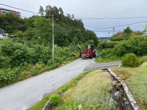 Opprydning langs veikanten i Brevik