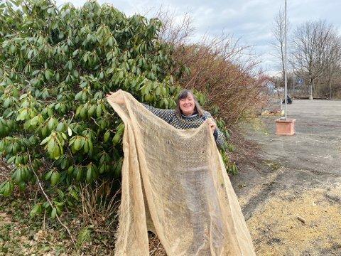SKYGG TIL: For å skygge til de vintergrønne plantene anbefaler Hanne Berge en striduk, et gammelt pledd eller en gardin. Viktigst er at det holder solen borte.