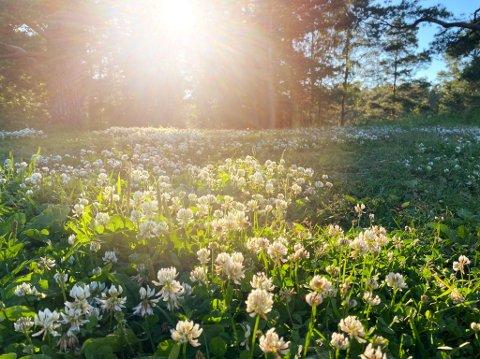 BLIR VÅTT: Nå er det om å gjøre å nyte sola før den forsvinner.