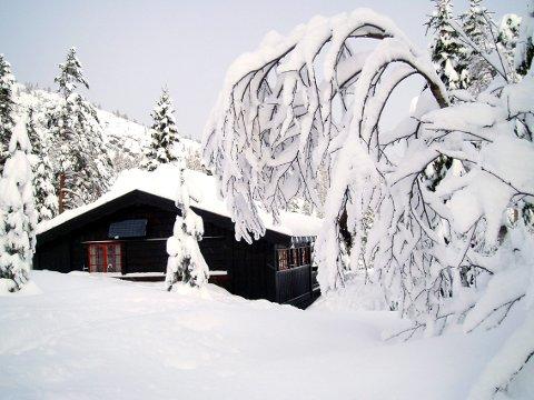 Pass på taket: Snøtyngden kan forårsake skade på hyttetaket. . (Foto: Beate Evensen/Telen)