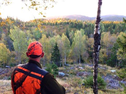 JAKT: I alt 344 elg er tilltatt skutt i Notodden og Hjartdal når jaktstarten går fredag. Bildet er fra jakta på Tåråfjell i Heddal i 2018.