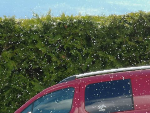 FNOKK: Hvite dotter har fått det til å se ut som det snør de siste dagene. Bildet ble tatt i Heddal søndag.