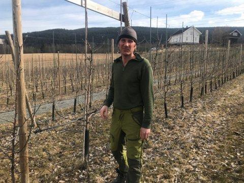 Bekymring: Fruktbonde Ole Christoffer Røste på Hjuksebø er bekymra for om han får med seg nok arbeidere når høysesongen starter i eple- og morellåkeren . (Foto: Privat)
