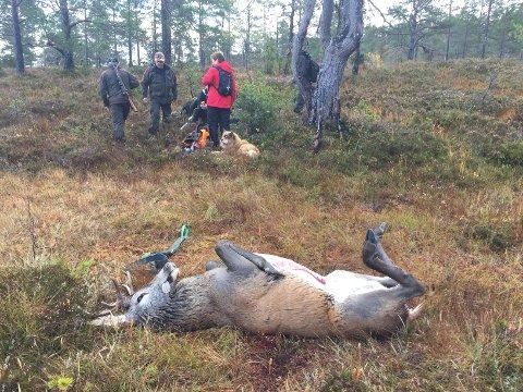 Jegere i Gjemnes, nye Molde og Hustadvika kommuner pålegges å delta i kartleggingen av skrantesyke blant hjortevilt under høstens jakt. Det skjer ved at det tas prøver av hjernen og svelglymfeknuter på alle dyr eldre enn to år.