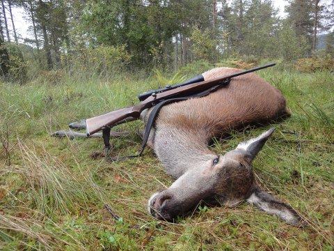 Hjortejegerne på Nordmøre har lagt bak seg sitt nest beste år noen sinne målt etter antall felte dyr. Til sammen ble det skutt 3.757 dyr.