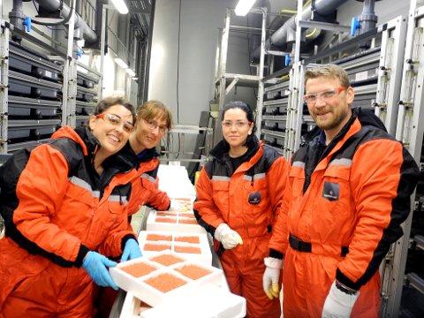 PÅ KLEKKERIET: Patricia Lopez Gonzalez (fra venstre), Steffi Conrad, Elisabeth Moe og Knut Søreng klare til å sette en ny generasjon atlantisk laks til verden.