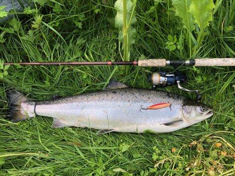 I Surna ble mer enn halvparten av all fisk satt ut igjen i fjor.